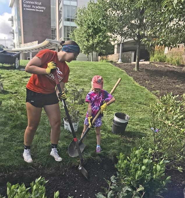 Rain garden in CT