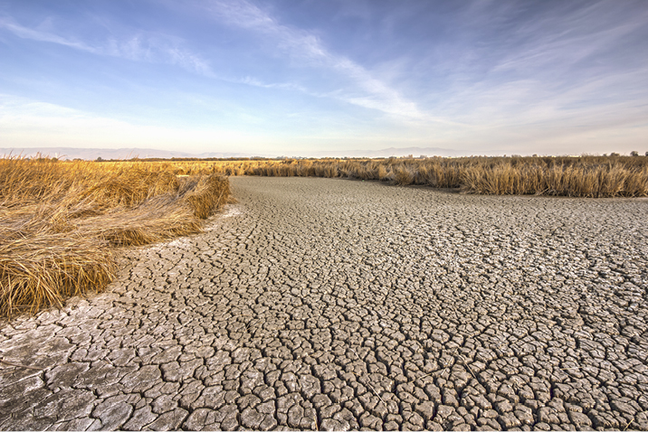 Drought, parched field