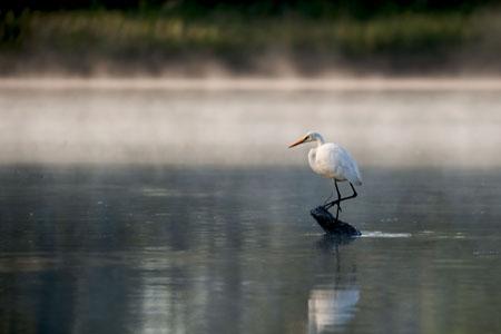 Heron on the James River. Credit - dmvphotos / Shutterstock