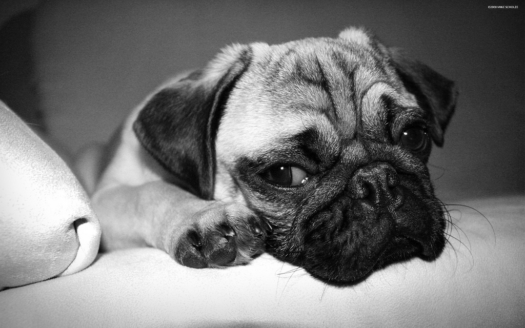 Sad puppy / flickr 53911972@N03 cc
