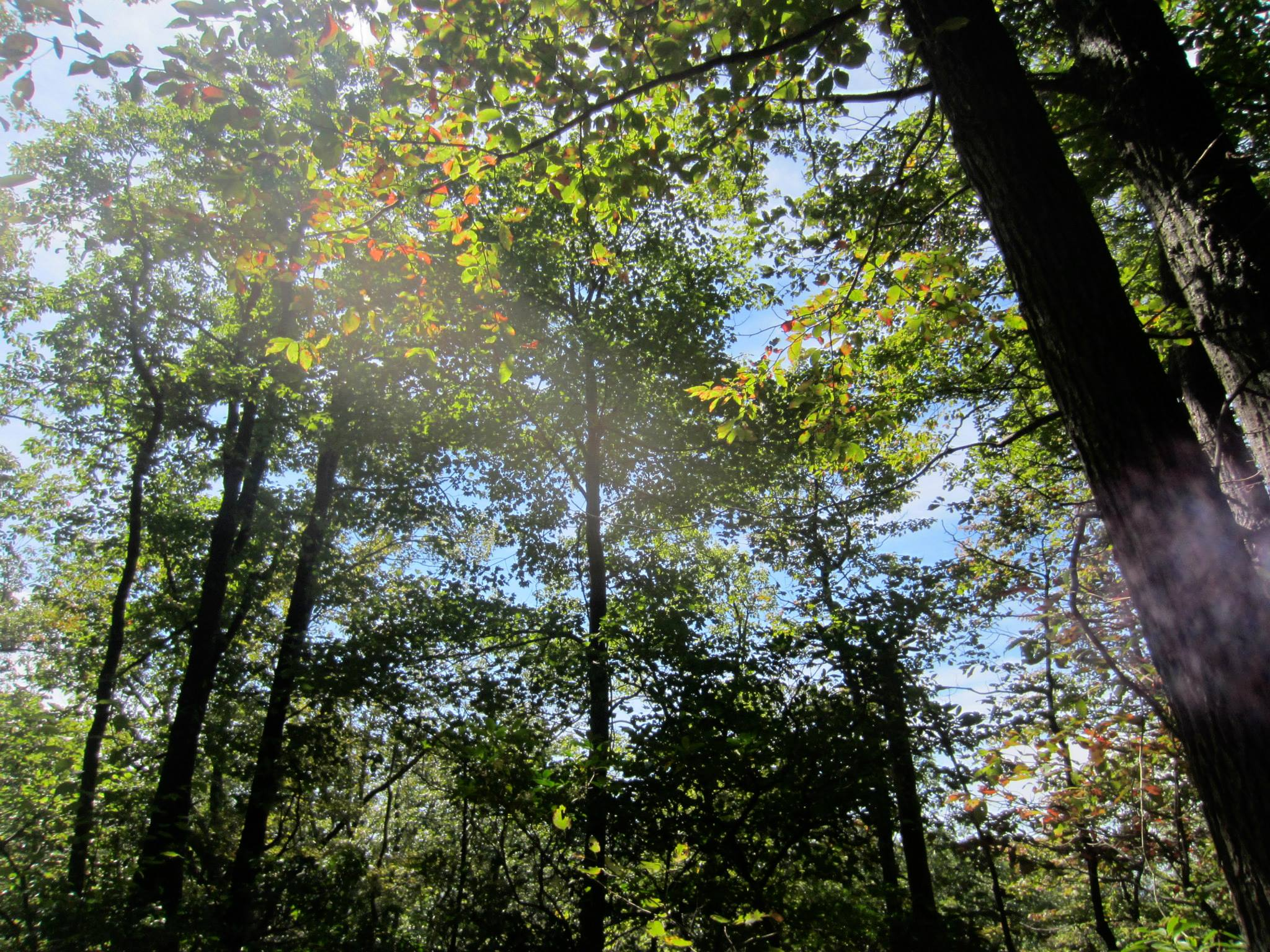 Maryland forest in late summer