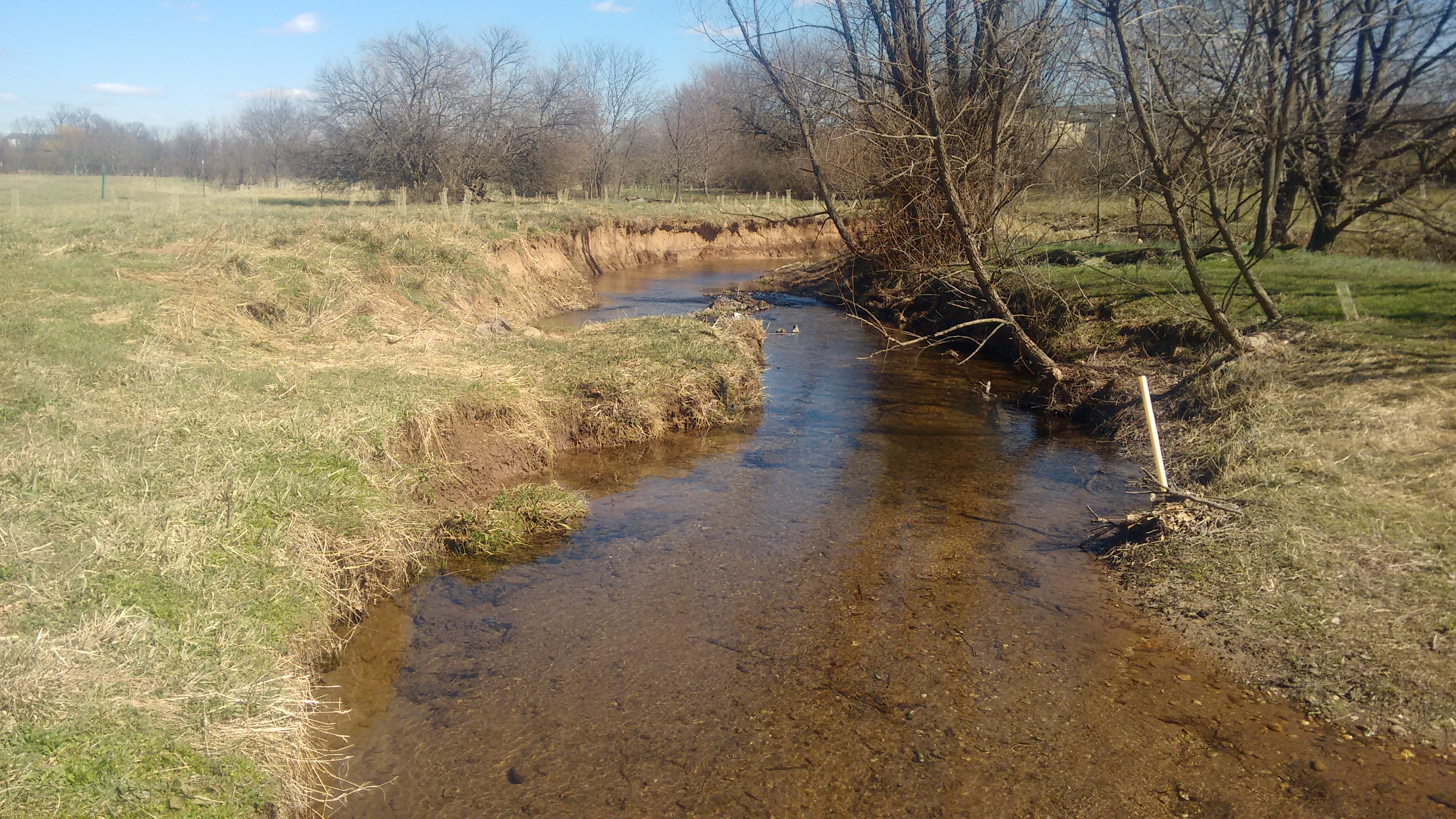 A picture of Little Tuscarora Creek in Frederick County. The banks are slightly eroded.  Several mature trees are leaning over toward the water on the left, while newly-planted trees are on the right.