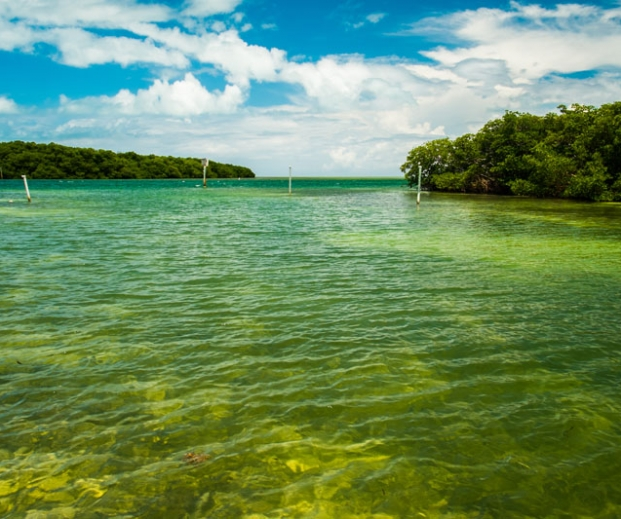 Lake and mangroves. Photo credit: Fotoluminate LLC / Shutterstock