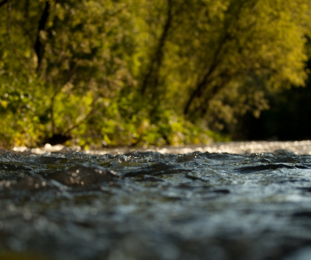 Stream, image from the surface of the water. Photo credit: Olesya Mishkina / Shutterstock
