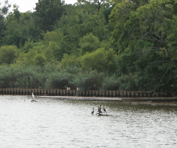 A Park on the Anacostia River - Brent Bolin/Clean Water Action