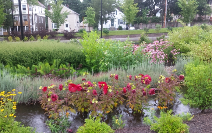Bioswales like this help control storm water bring the beauty of nature to Providence College's urban campus. Photo By Dave Everett