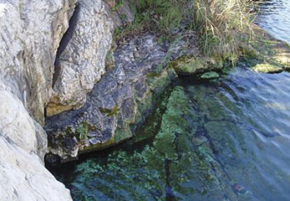 Barton Spring. photo courtesy of U.S. Geological Survey.