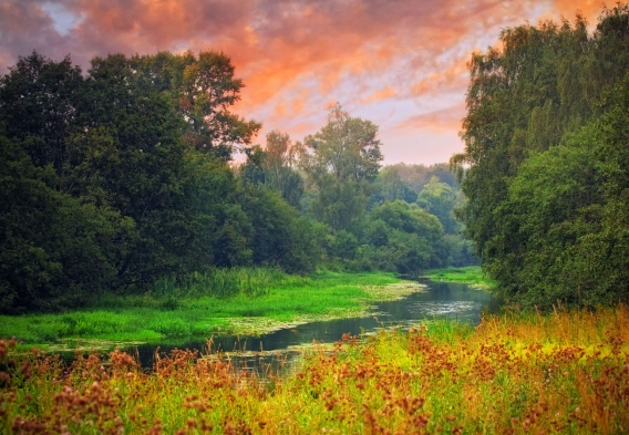 Pink Sky, a stream in a forest. Photo credit: Julia Shepeleva / Shutterstock