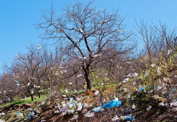 plastic bags in a tree / photo: shutterstock, Andriy Solovyov