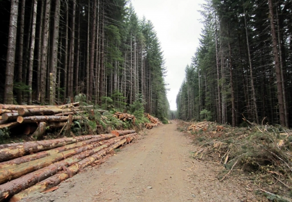 Logging road -- Credit David Stanley, Flickr - Creative Commons