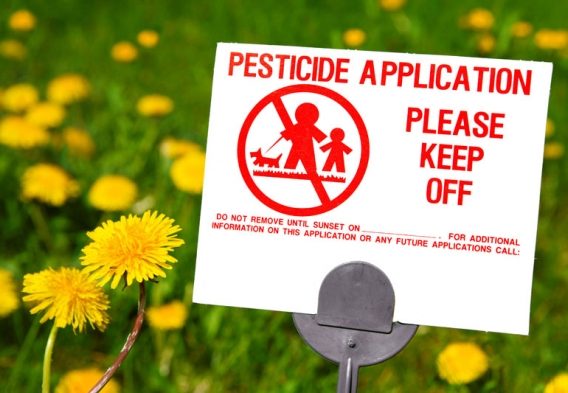 Pesticide application sign, field of dandelions