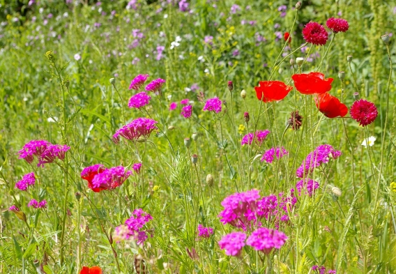 Wildflowers. photo: flickr.com/activesteve CC BY-ND 2.0