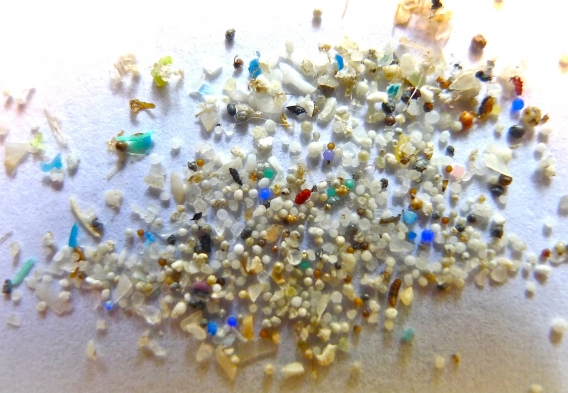 Microplastics_Rhode Island. Photo Credit Oregon State University