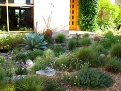 Yard Succulent Landscaping